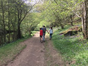 Walking in Fingle Woods up to Castle Drogo